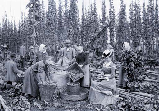 Kratky Frantisek Sklizen chmele ca 1898